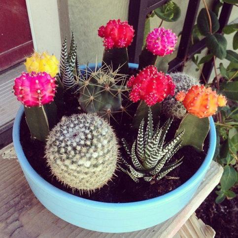 Разновидности мини-кактусов фото