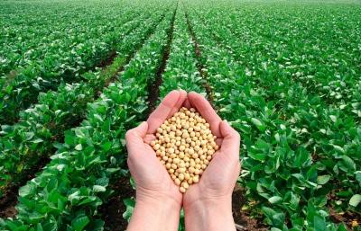 Чем микроэлементы полезны для растений и как их применять