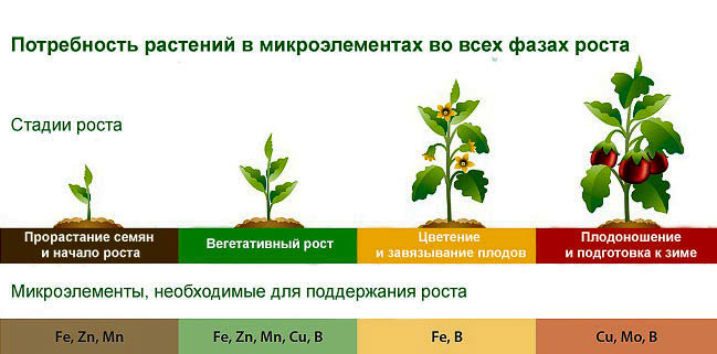 Влияние микроэлементов на растения