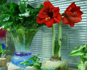 Гидрогель для комнатных растений