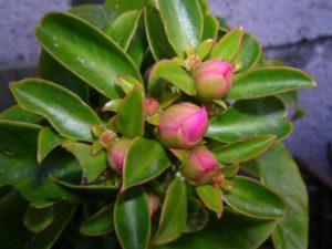 Как создать благоприятные условия для растения?