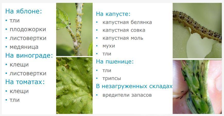 От каких вредителей помогает инсектицид Алиот КЭ